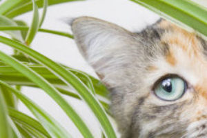 Household Pet Dangers: Plants, People Food and Cords